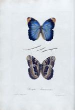 Delectus florae et faunae brasiliensis
