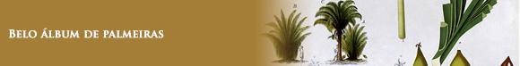 Belo álbum de palmeiras