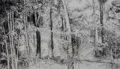 Paisagem Amazônica - Grafite sobre papel - Fernando Augusto