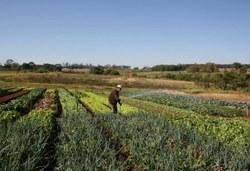 Agricultura aprova nova definição de agricultor familiar e empreendedor rural