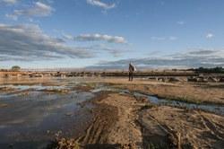 Audiência pública conjunta vai discutir a situação atual da Bacia Hidrográfica do Rio São Francisco e as medidas em andamento para sua revitalização.
