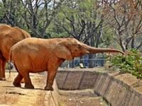CMADS debaterá o sucateamento dos zoológicos brasileiros
