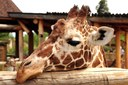 CMADS debaterá sobre a proibição, em todo o Território Nacional, de Zoológicos, Aquários e Parques que exponham animais silvestres.