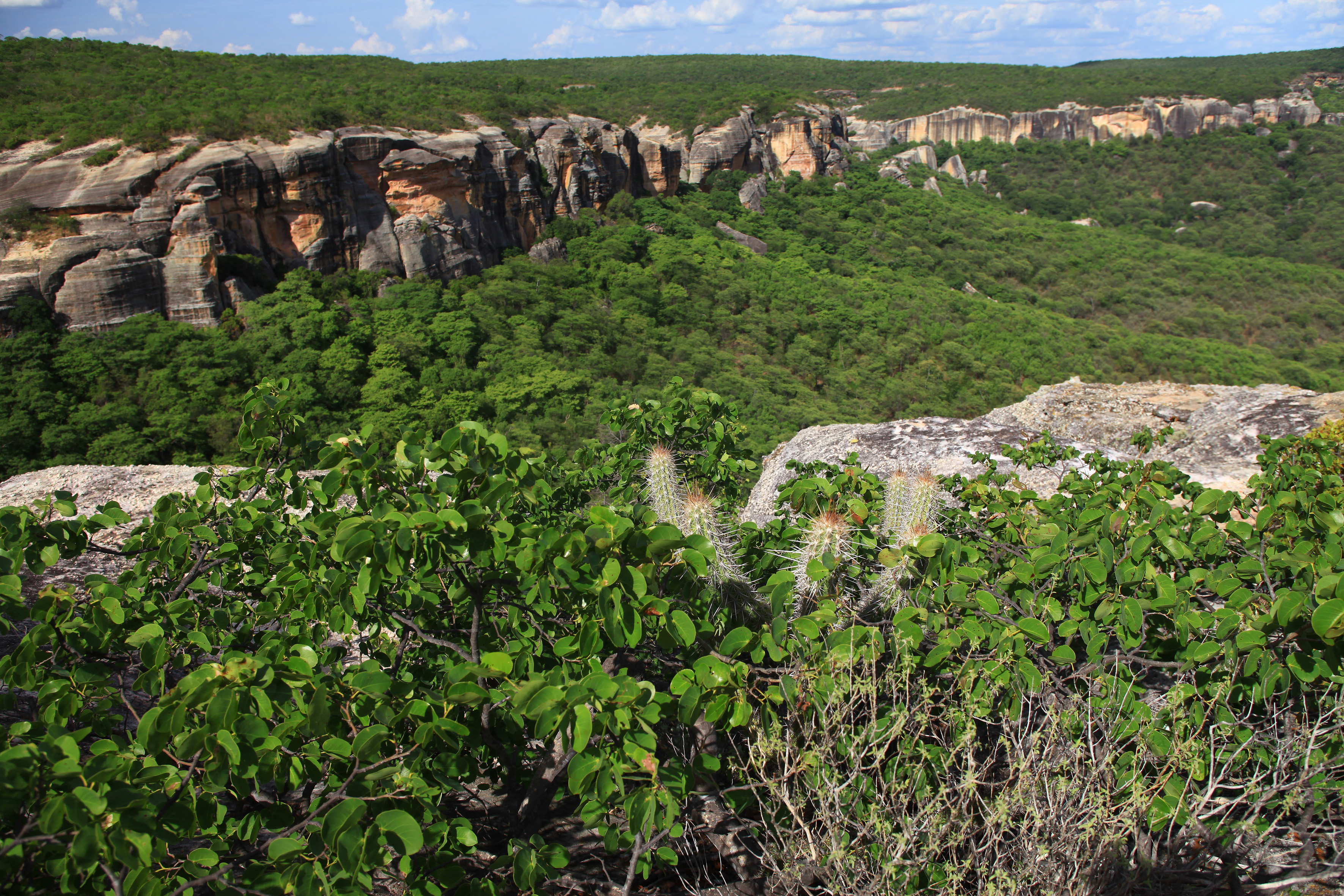 CMADS realizará audiência pública sobre o Bioma Caatinga e sua importância na vida do povo nordestino e no equilíbrio ambiental.
