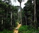 Seminário - As Unidades de Conservação no Brasil: Situação atual e oportunidades.