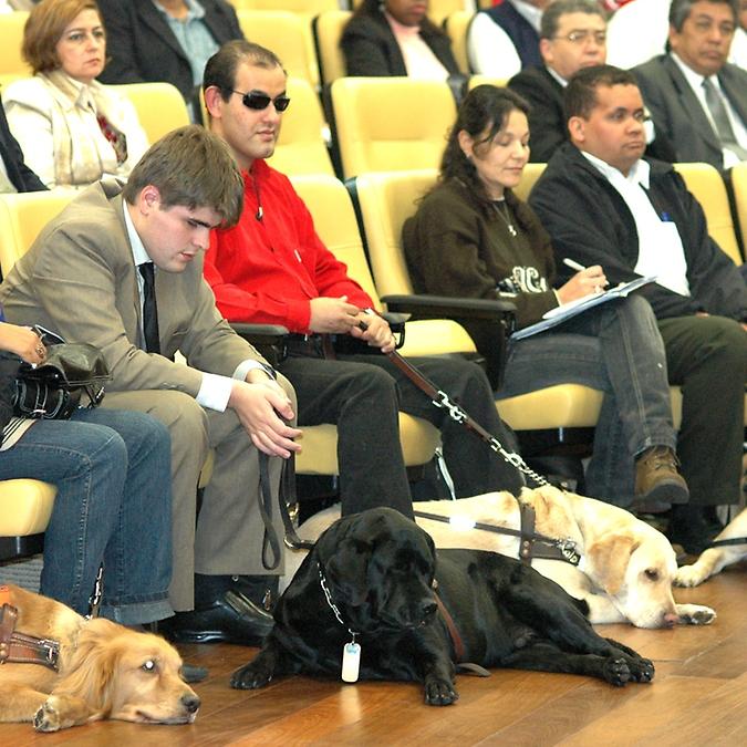 Direitos Humanos e Minorias - Deficiente - Cão-guia