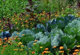 Câmara aprova certificação para produtos da agricultura familiar