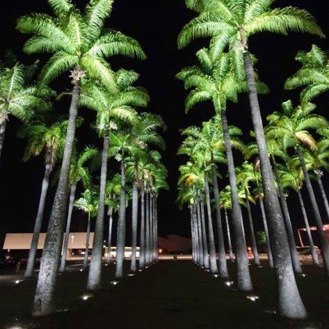 Alameda das Palmeiras