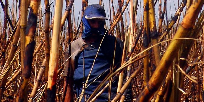 trabalhador rural, cortador de cana, exploração, trabalho escravo